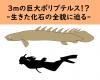 全長3mの巨大ポリプテルス!?-「生きた化石」の全貌に迫る