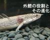 外鰓とは何か? – 進化的起源と役割